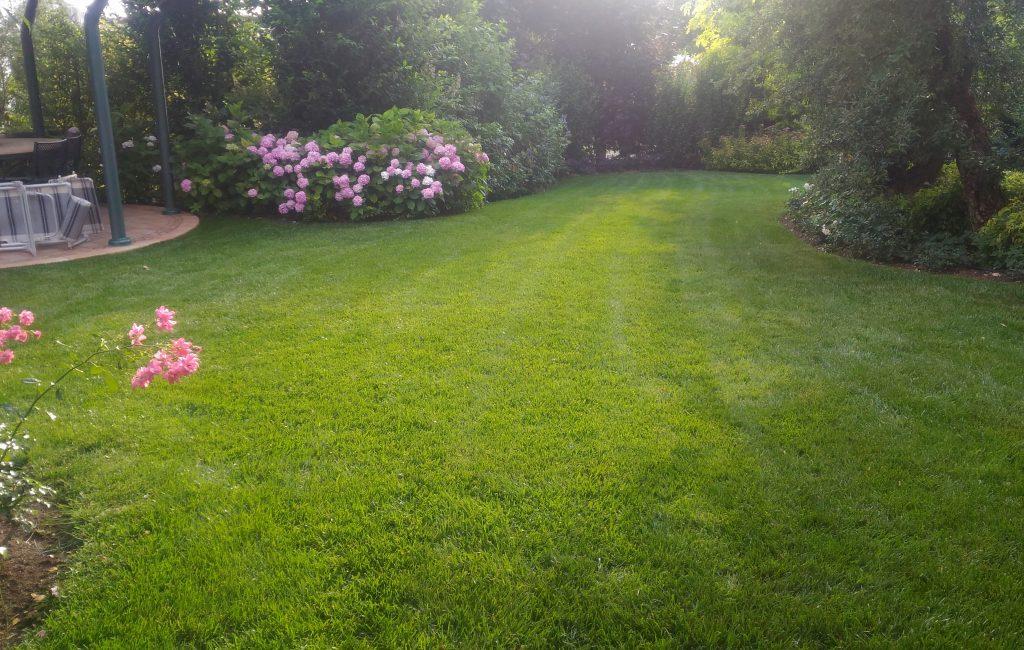 Il Giardino di Andrea Zenegaglia